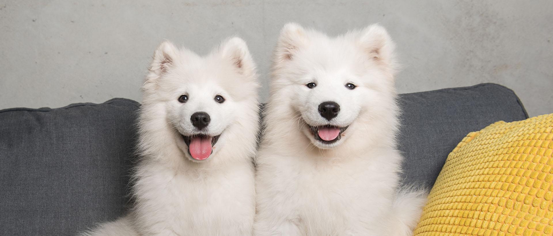 Calor dogs refer a friend