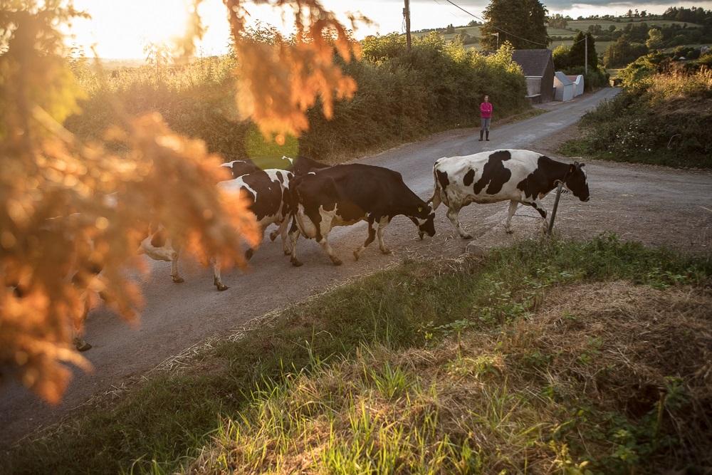 Dairy Farming LPG